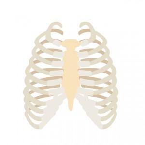 頚肋症候群は通常より肋骨が1本多い