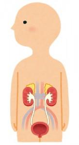 水戸の整体 水分不足の問題 尿と腎臓の関係