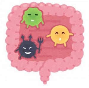 水戸の整体 3つの腸内細菌が存在している