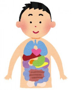 水戸の整体で腰痛の改善 内臓は常に活動している