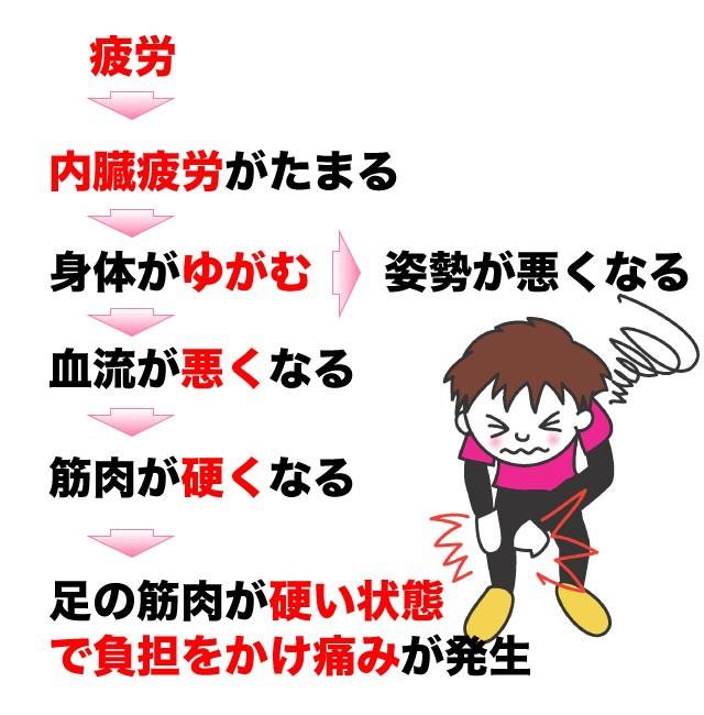 鵞足炎の発生メカニズム