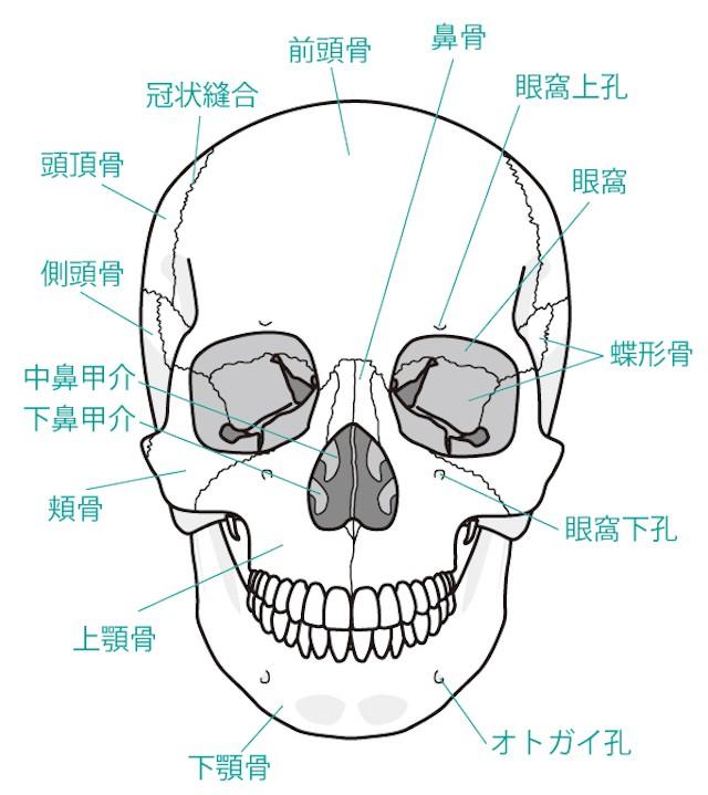 顎関節 症状 顎周り