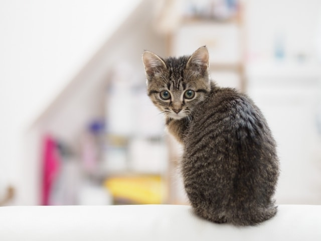 猫背トップ画像